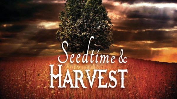 Don't Give Up On Your Seed, It's Harvest Time!